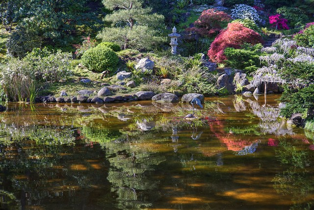 Morning glow at Hakone Gardens