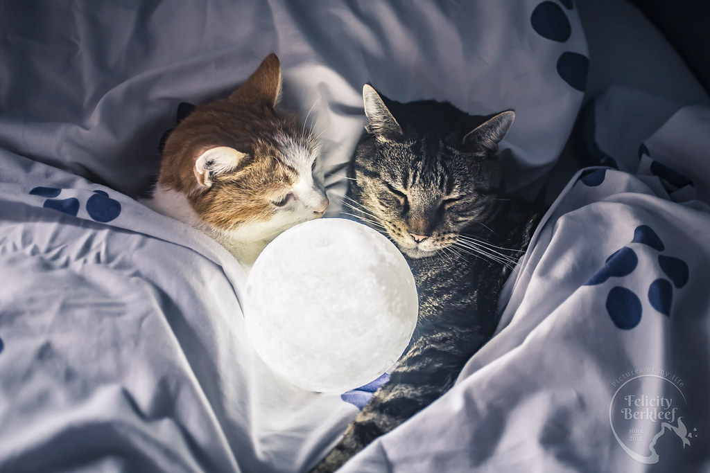 Their Moon