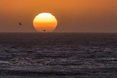 2 Pelican Sunset, Scott Creek Beach, Davenport, California