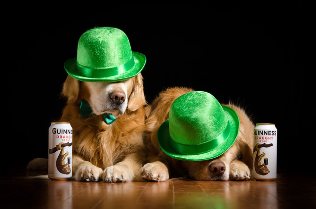 Irish Dogs?