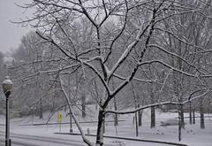 First Day of Spring Snowfall -- North Barton Street Arlington (VA) March 21, 2018