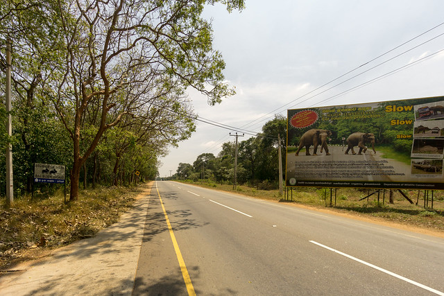 Elephants might cross