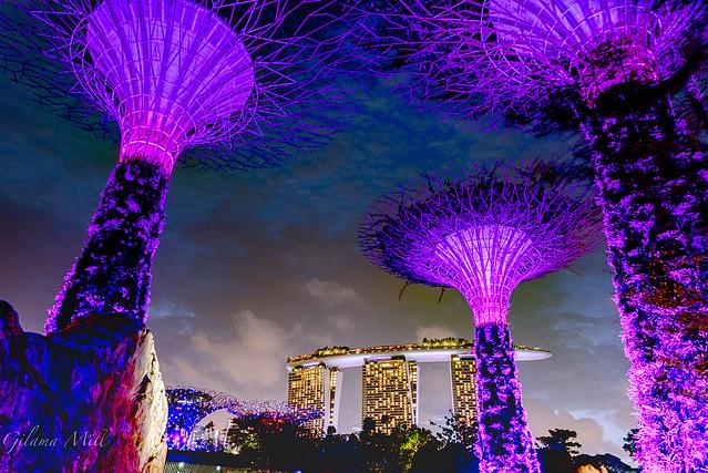 Singapore, Nikon D750, Sigma 24-105mm F4 DG OS HSM