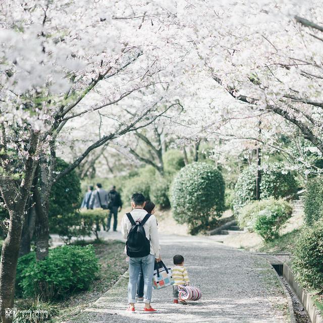 她說旅途若是卷底片|春,山陽 | 07