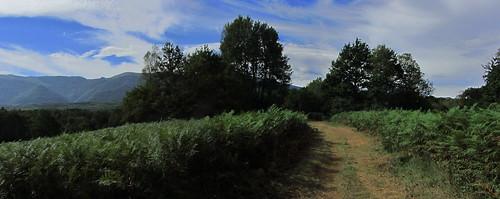 20120925 27 093 Jakobus Weg Bäume Farne Wolken_P01