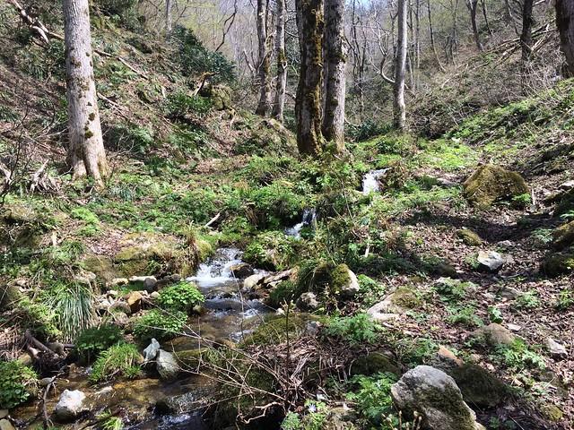Take a walk in the Hillback