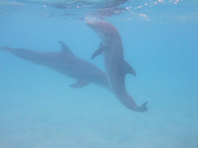 Dolphin 039