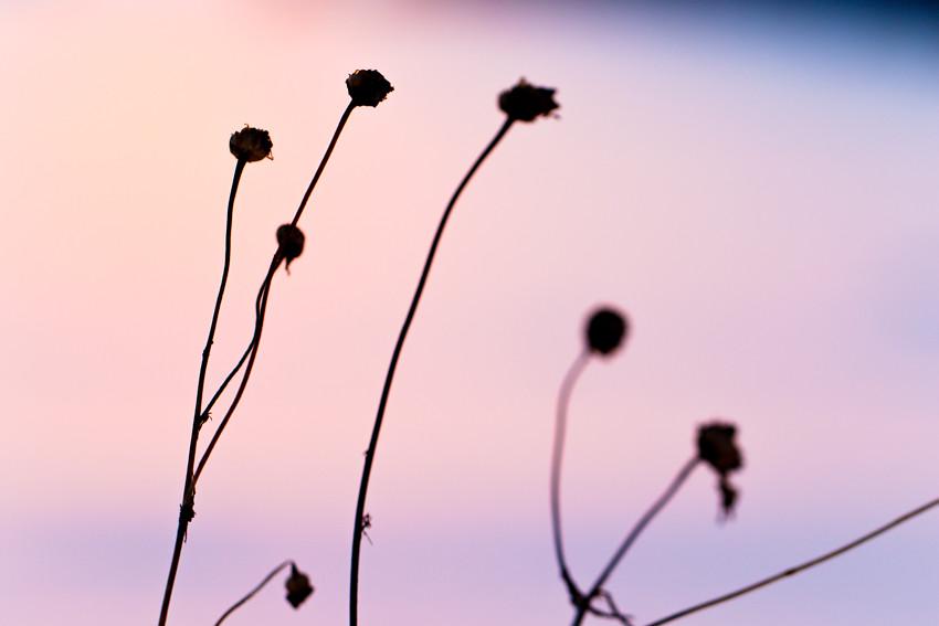 talvinen auringonlasku-3137