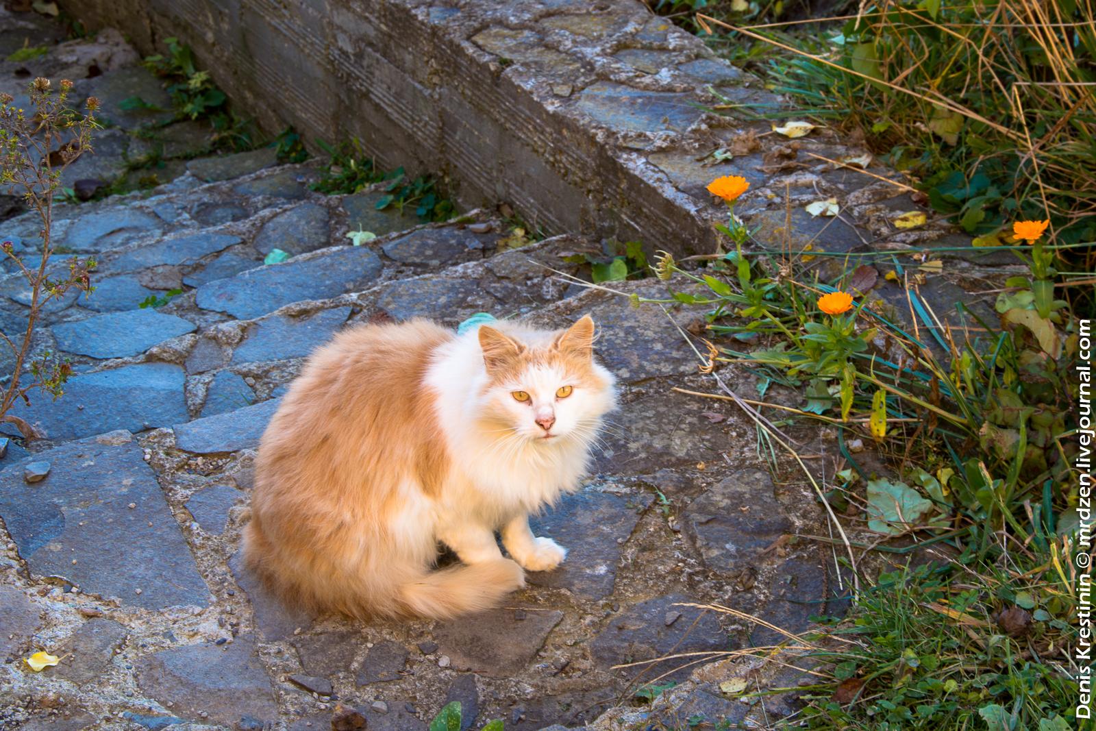 Дежурный котейко