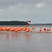 Mexico - Yucatan - Celestun - flamingos por Harshil.Shah