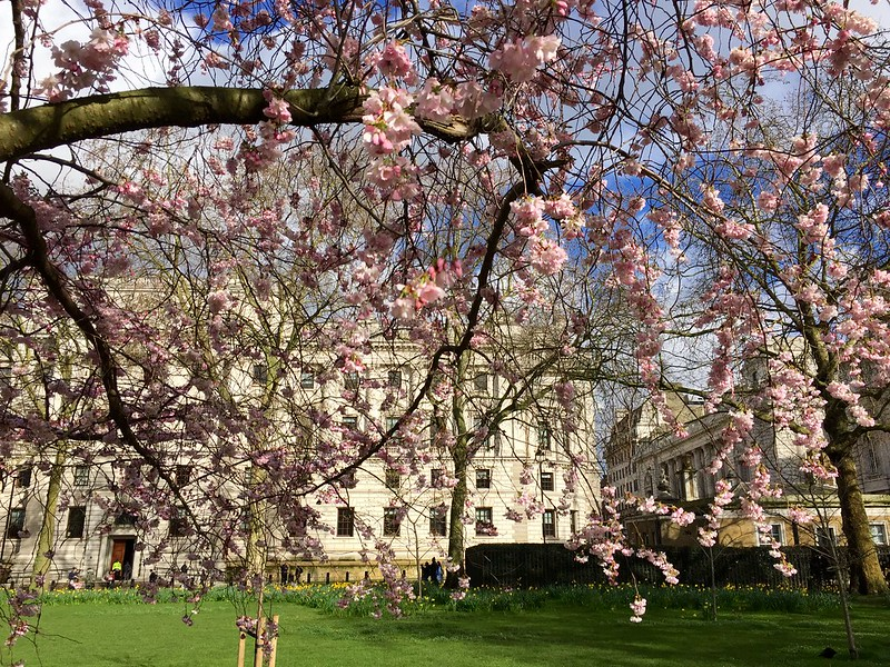 2018 St James's Park cherry blossom