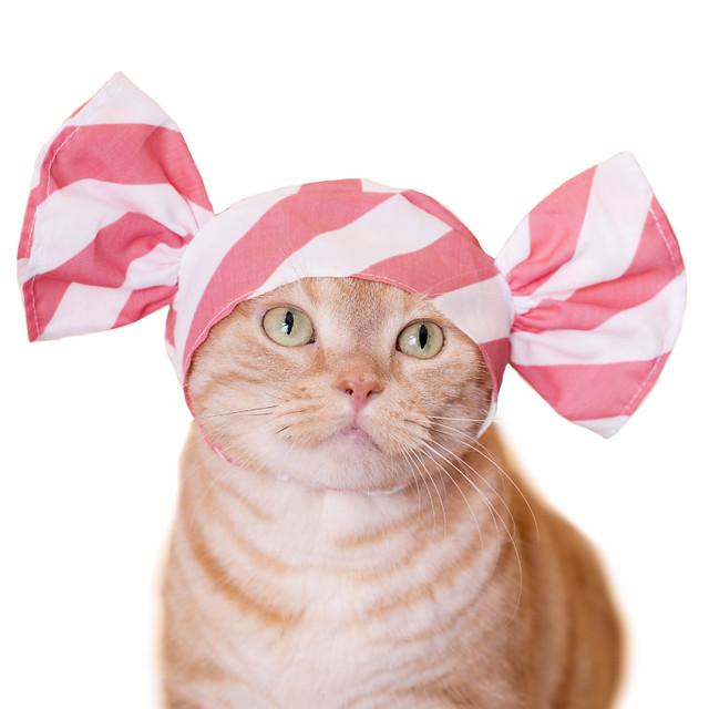 不要看著牠們一直流口水啦~~ 奇譚俱樂部【可愛貓咪頭套。糖果貓】貓星人專屬轉蛋 第19彈 可口登場!!かわいい かわいい ねこキャンディちゃん