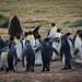 Pinguinos Rey, Tierra del Fuego by loretogomezdodman