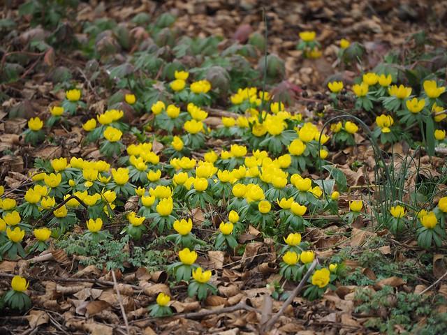 Sat, 2018-02-24 11:52 - Brooklyn Botanic Garden