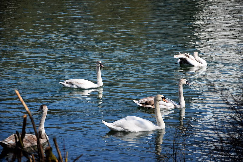 Swans 07.04 (20)