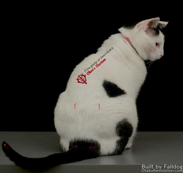 MG Cat 5