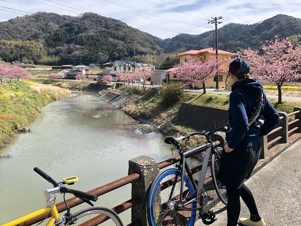桜見サイクリング