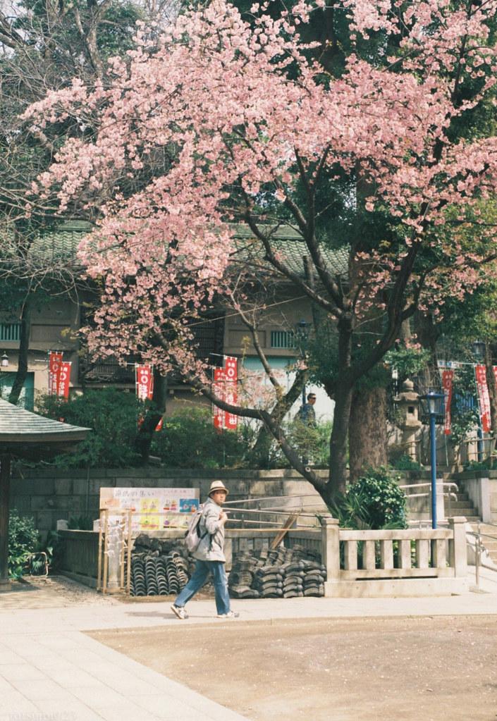 2018-03-17 上野公園の早咲きの桜 001-18