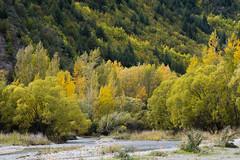 Autumn in Arrowtown, Central Otago