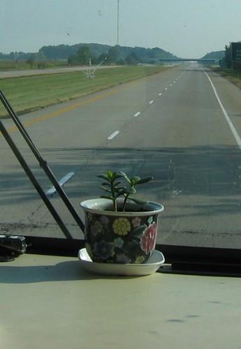 dashboardplant