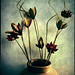 Fake flowers by [kren]