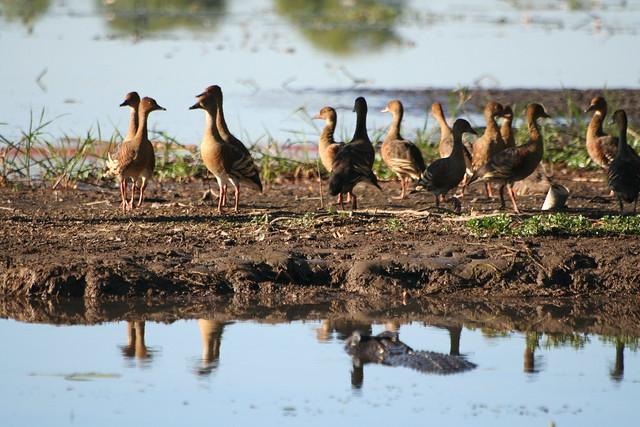 Nearest... - Yellow River - Kakadu National Park