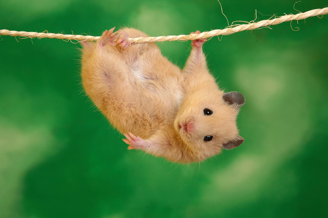 Hamster Hang in there