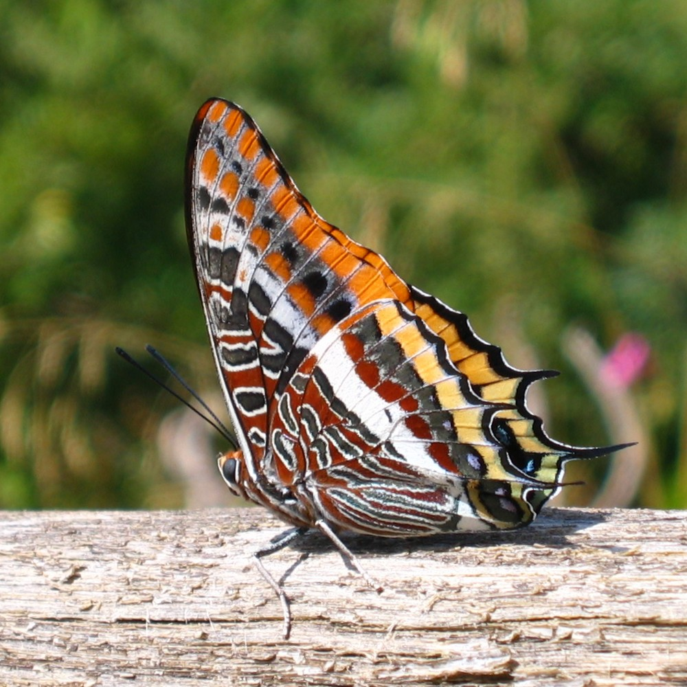 Exotic butterfly | Flickr - Photo Sharing!