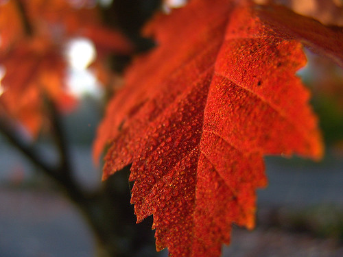 autumn nature leaves sunrise portland sony dew pdx portlandor rockybutte dscf828 josephwoodhillpark pleasenoimageincommentespeciallygroupinvitethatcontainsimagethankyou