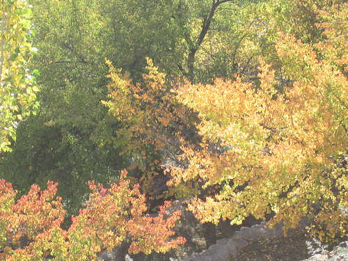 Autumn leaves, near Duikar, Karimabad