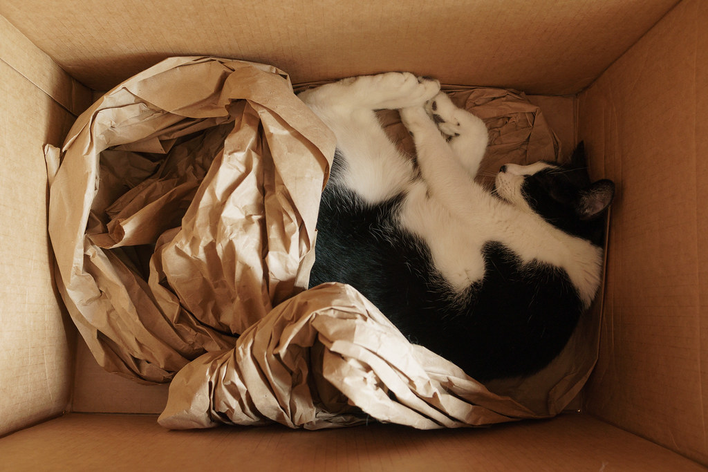 Our black tuxedo cat Boo sleeps curled up in a large box surrounded by wrapping paper