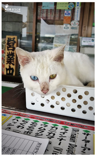貓島(奧武島)中本鮮魚天婦羅-45