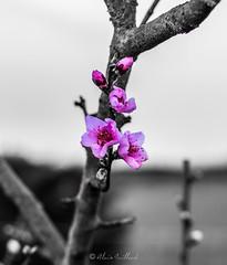 goodbye winter, hello spring !