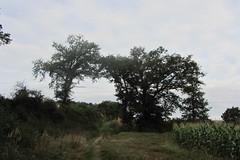 20120919 22 067 Jakobus Weg Bäume Feld