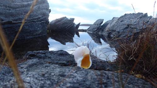 Smokey shell