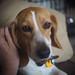 I love this hound