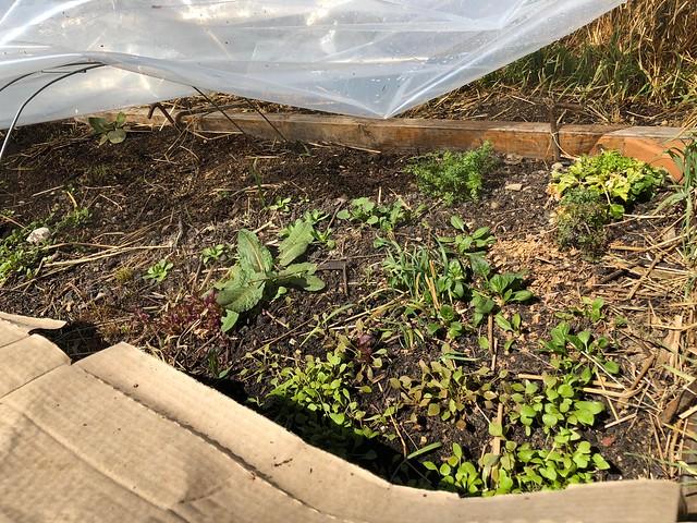 Early Spring Straw Bale Garden