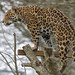 ROG_7444b Jaguar