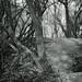 walking path 6