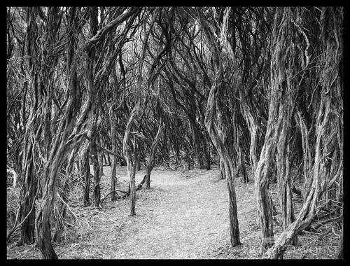 Ghost forest
