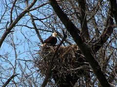 nest duties