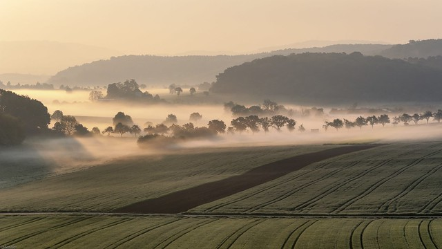 *golden hour in the valley of the morning mist*