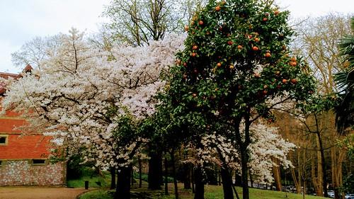 Preludio de Primavera. Donostia