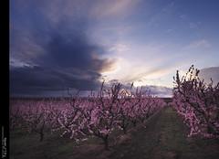 Aitona... un món en rosa (II)...