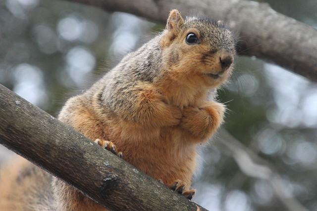 Squirrels In Ann Arbor, Canon EOS REBEL T3, Canon EF 300mm f/2.8L IS II USM