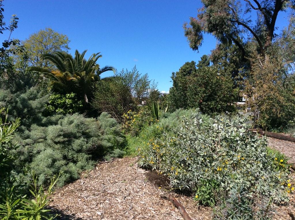 Coffee in the Garden – Vallejo 2