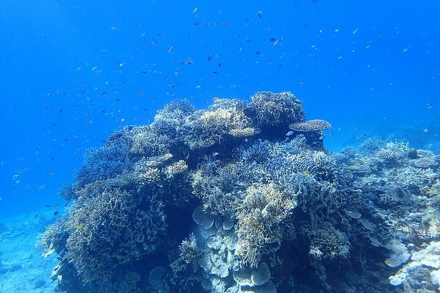 珊瑚美しかったですね~