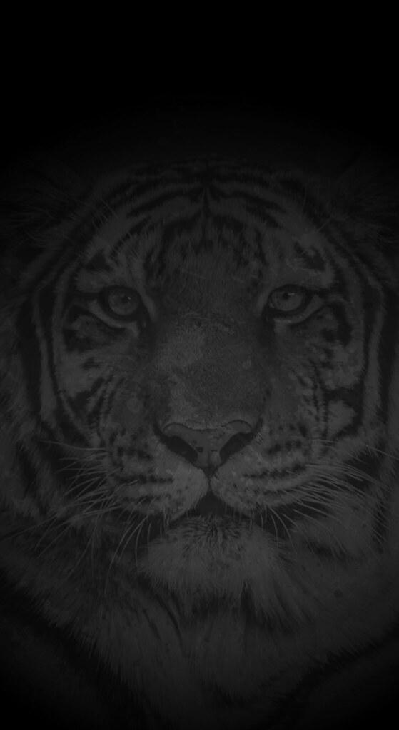 Richmond Tigers Iphone X Wallpaper Black Splash This Wal Flickr