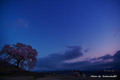 2山梨の桜巡りD850(18.3.31) 026