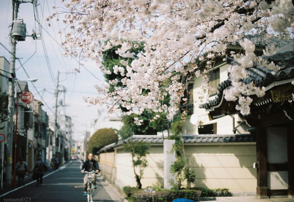 2018-03-30 谷中の桜 006
